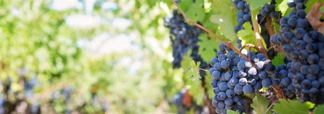 What Winemaking Can Teach Us About the Financial Advice Business